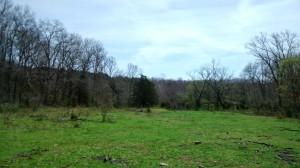 High pasture