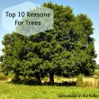 Reasons for Trees