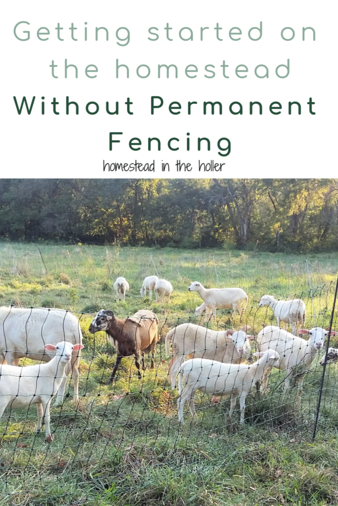 Get Started on your homestead without permanent fencing