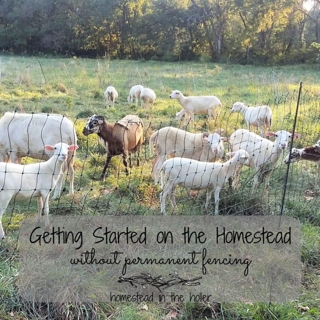 Getting started on the homestead without permanent fencing