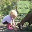 Farm chores with toddler