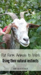 put farm animals to work using their natural instincts