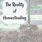 The reality of homesteading