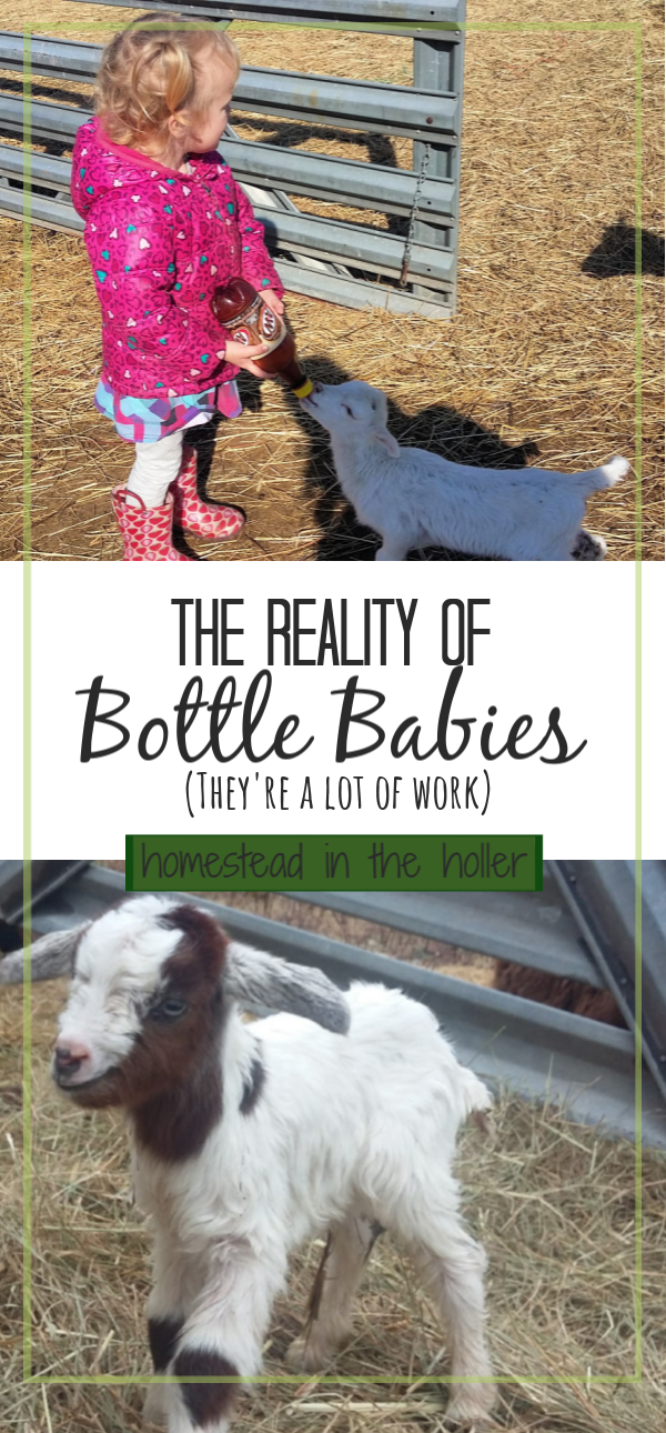 The reality of bottle babies. They're a lot of work.
