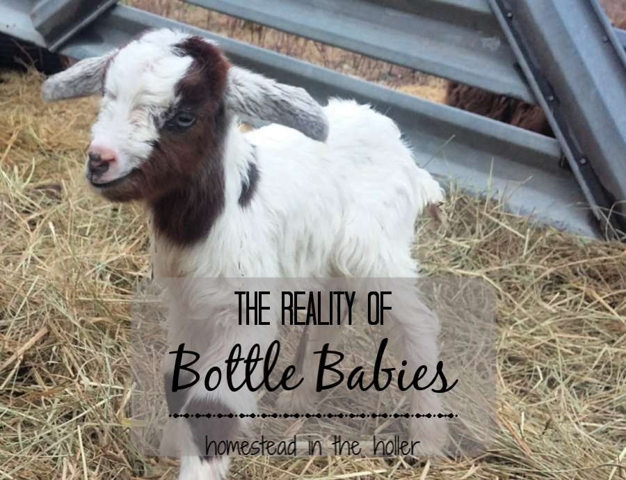 Reality of bottle babies