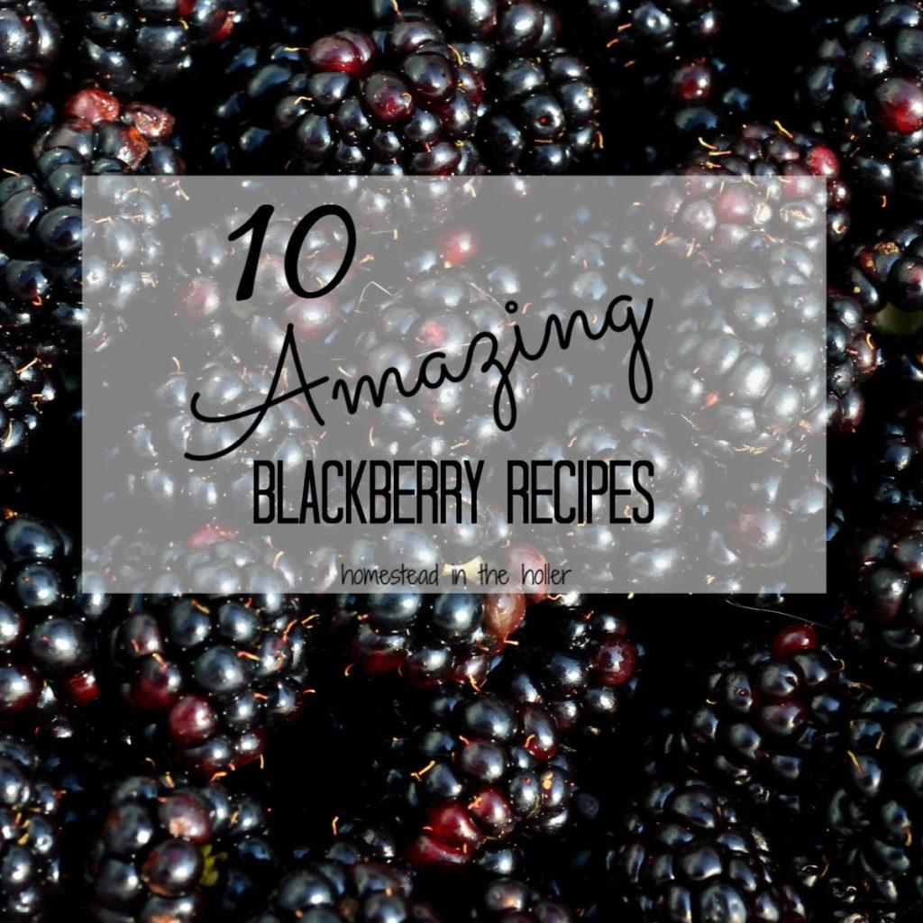 10 amazing blackberry recipes